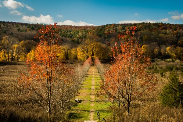 Fall foliage at Dover Stone Church hiking trail in Dutchess County NY