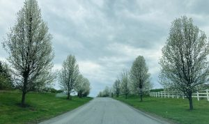 Apple blossoms line the entrance to Sleight Farm community of new homes in the Hudson Valley